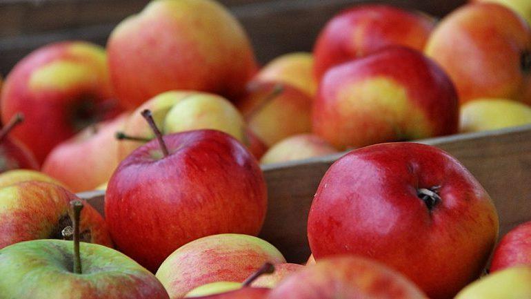 Сколько можно хранить яблоки