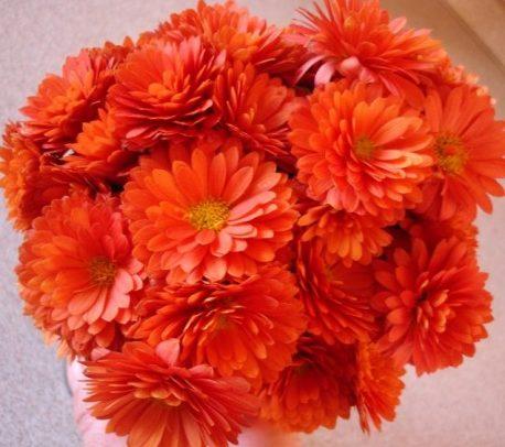 Хризантемы садовые многолетние низкорослые сорта
