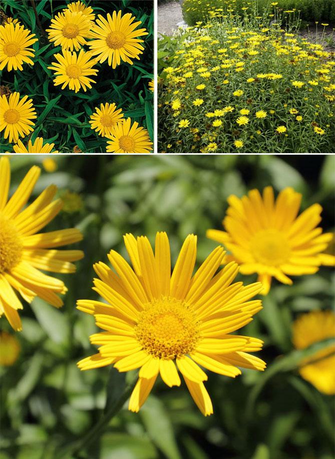 Цветы цветущие в июне