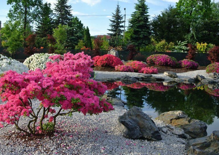 знаем, красивоцветущие кустарники для сада фото этом уроке