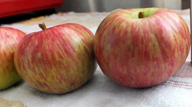 Яблоки сорта конфетное фото