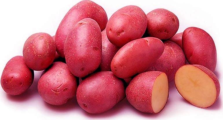 Картофель Ред Скарлет – отзывы