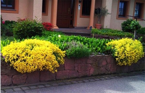 Растение ползущее по стенам