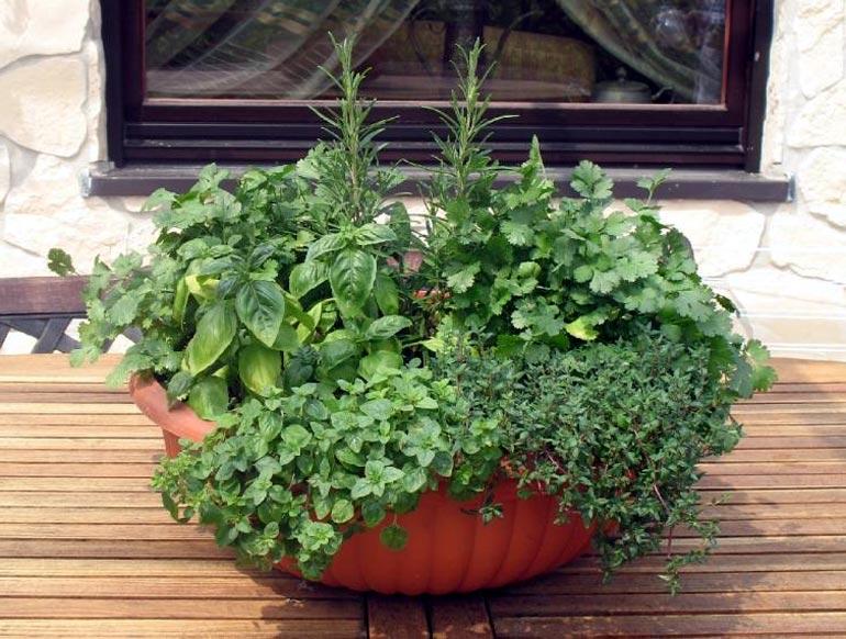 фото пряных растений с названиями и цветами предназначены для