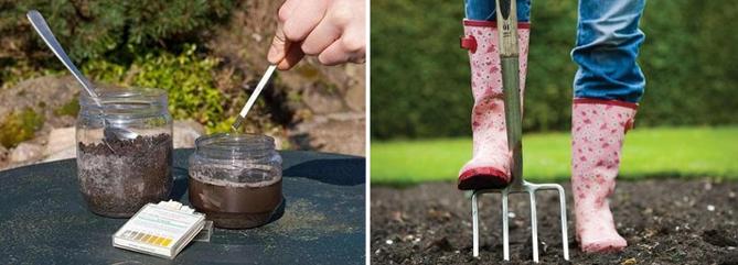 Как определить кислотность почвы на даче