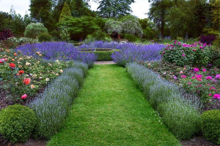 Бордюрные цветы низкорослые – фото и название