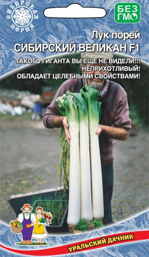 Как выращивать лук порей через рассаду