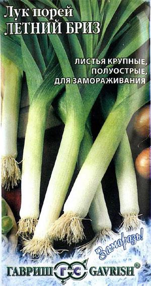 Лук порей – выращивание из семян