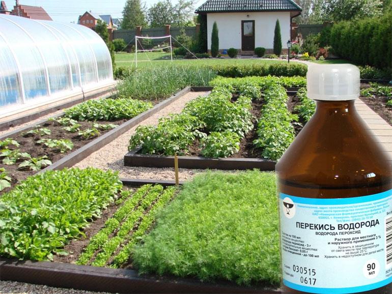 Как применять перекись водорода для комнатных растений