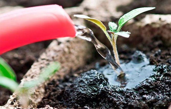 Перекись водорода как одно из лучших удобрений как применять