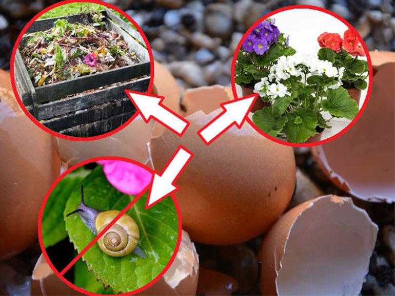 Как правильно применять яичную скорлупу – все о пользе для сада и огорода