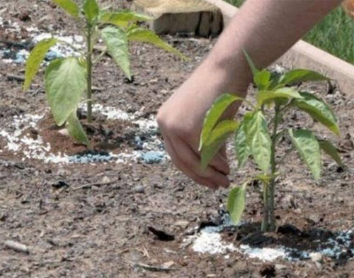 Чем полезна зола как удобрение
