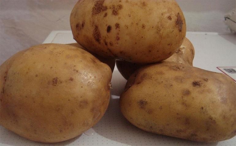 сорт картофеля кураж характеристика отзывы