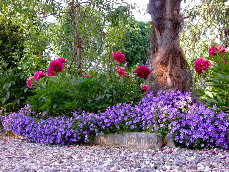 Когда цветет колокольчик